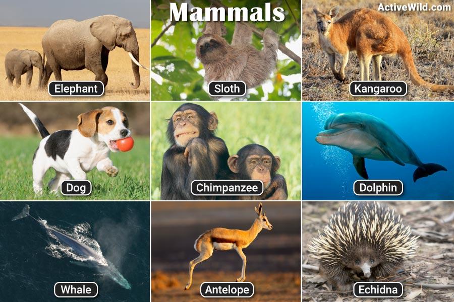 Mammals Pictures