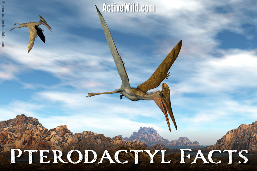 Pterodactyl Facts