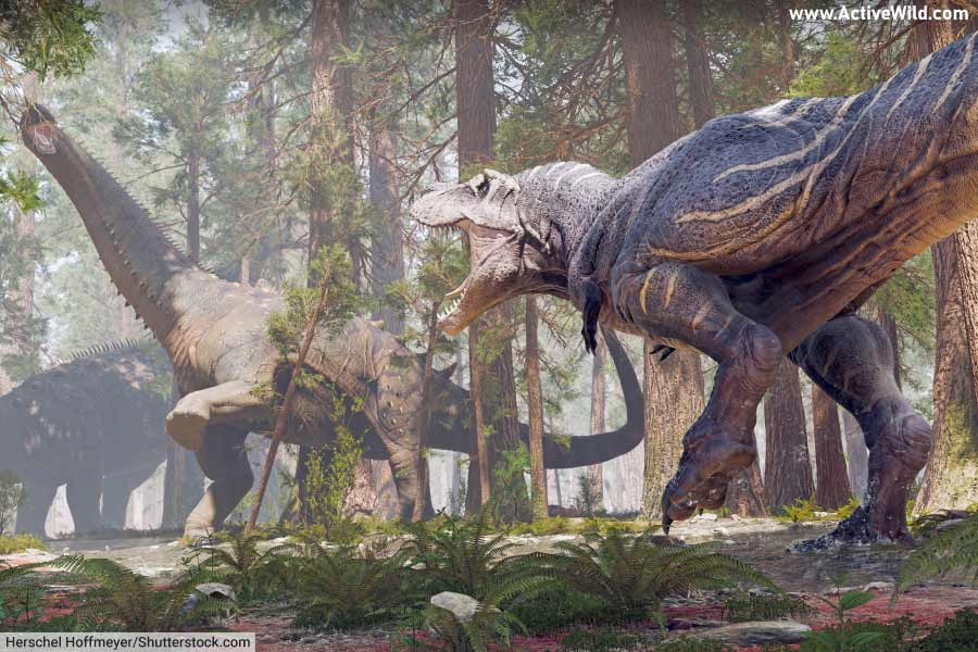T rex and Alamosaurus