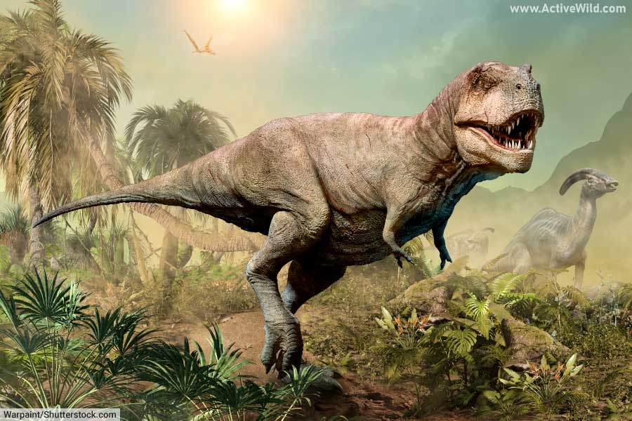 T rex and Parasaurolophus