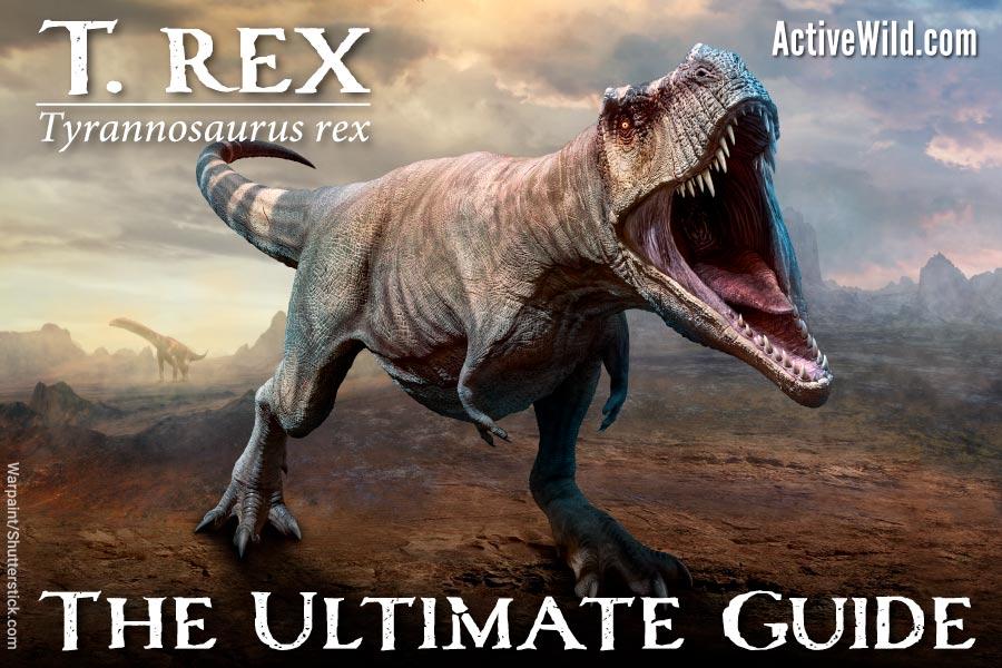 t rex tyrannosaurus rex
